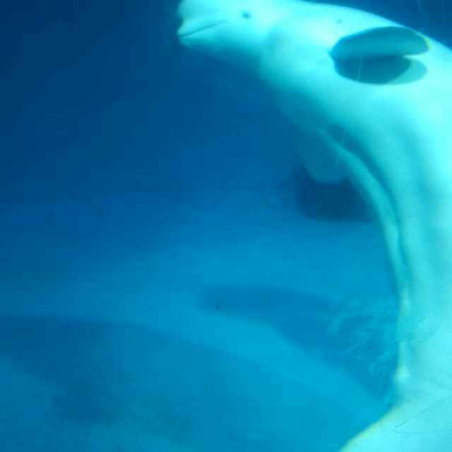 壁纸 海底 海底世界 海洋馆 水族馆 640_640
