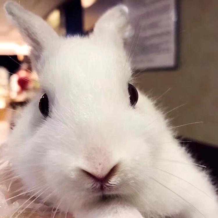 兔子 片大全可爱真实